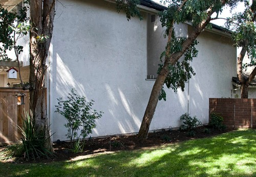 This is the first area to be planted with bee-friendly plants. It abuts the neighbor's house.