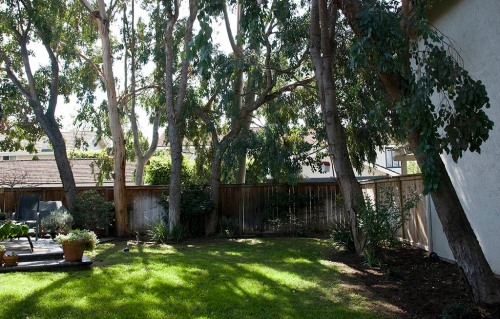 Garden beds and lawn surrounded by eucalyptus trees.