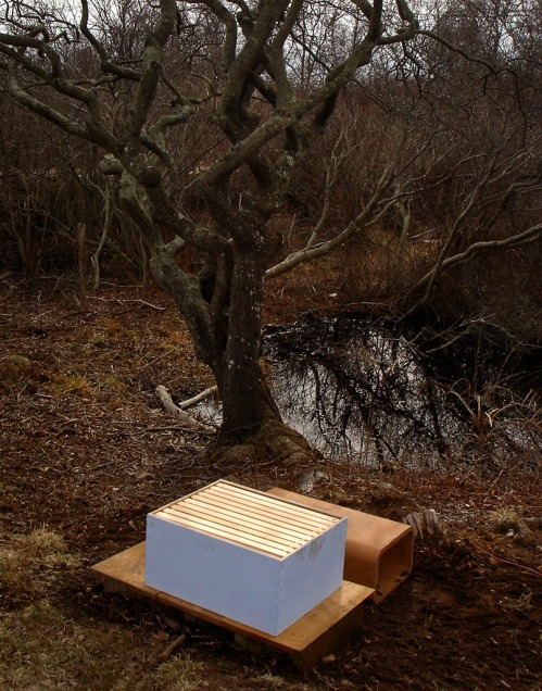This is where the hive will live — a pond in front and the garden behind.