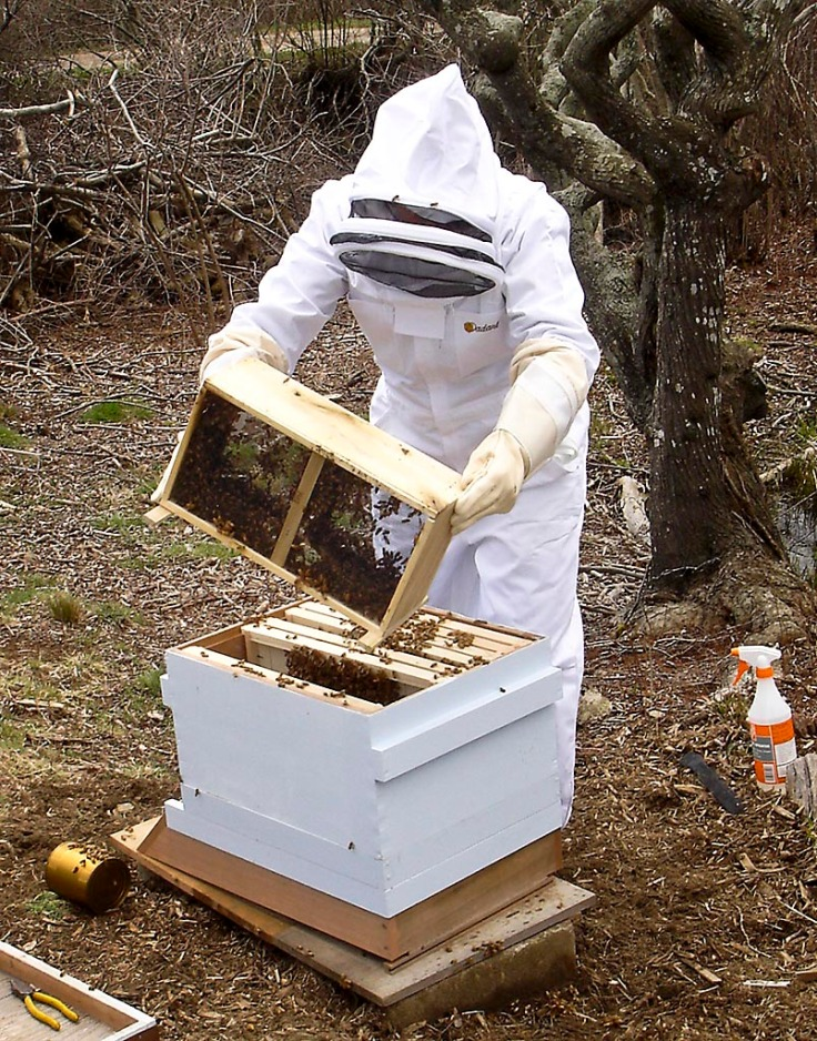 Safe inside the bee suit.