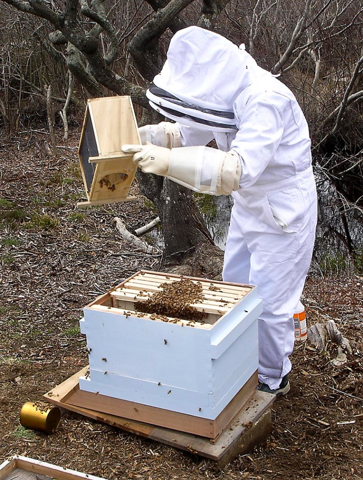 Pouring out the rest of the bees.