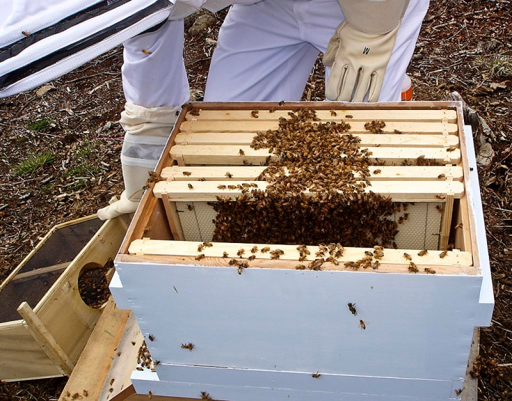 A closer look at the bees in the frames.