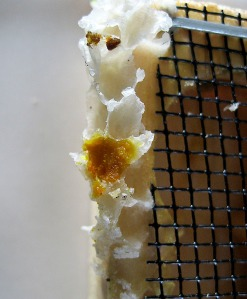 Burr comb on the empty Queen's cage.