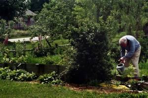 Dad watering some late season cuttings