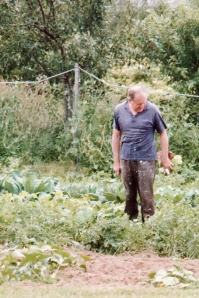 Dad in his vegetable garden with just-harvested lettuce - as always in paint-spattered work clothes and a bandaged finger
