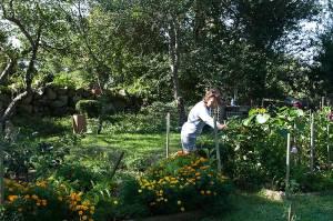 Mary Beth transformed Dad's garden