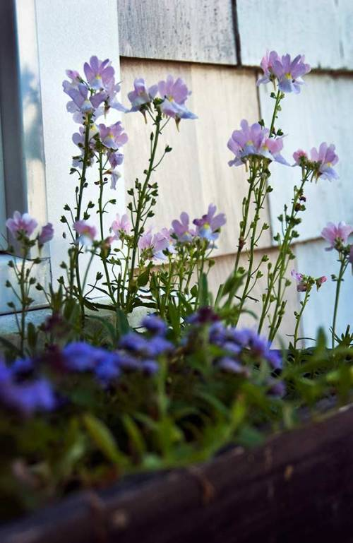 A sweet flower-filled window box graces the cottage.