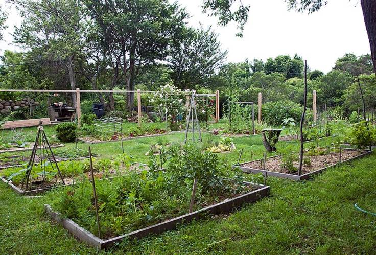 The vegetable garden five years later