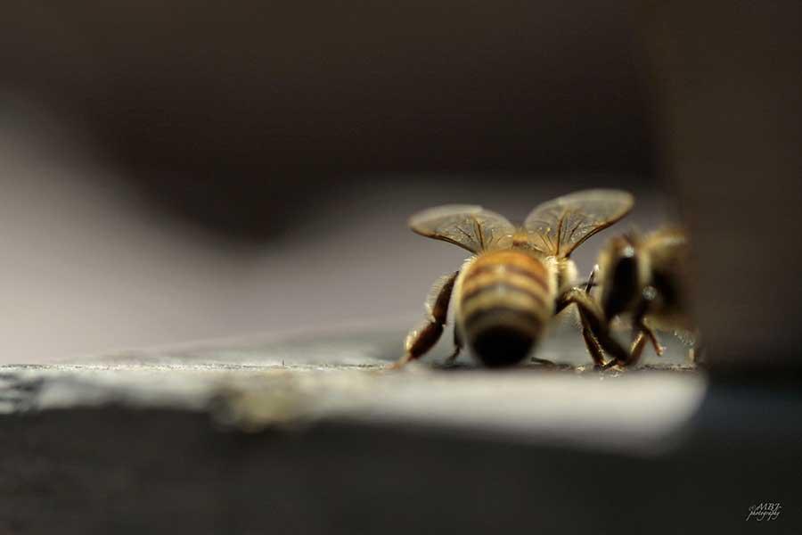 Thursday S Three Honey Bee The Paper Mama