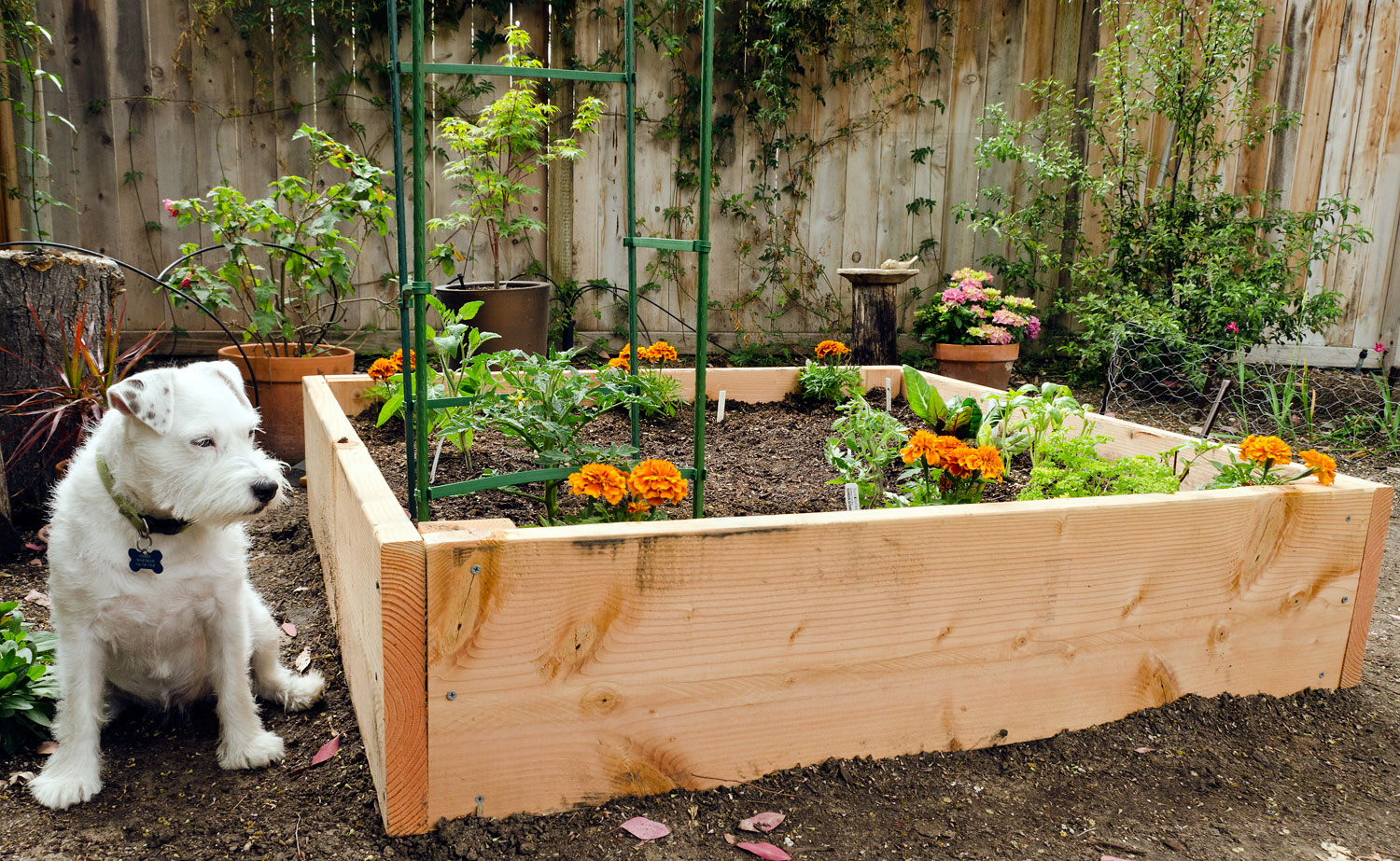 Raised beds bees and chicks How to make a small garden